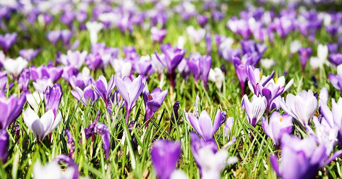春一番。花粉の時期